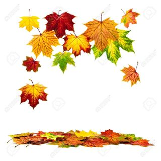 14856461-multi-colored-autumn-leaves-falling-down-with-white-copy-space-stock-photo.jpg
